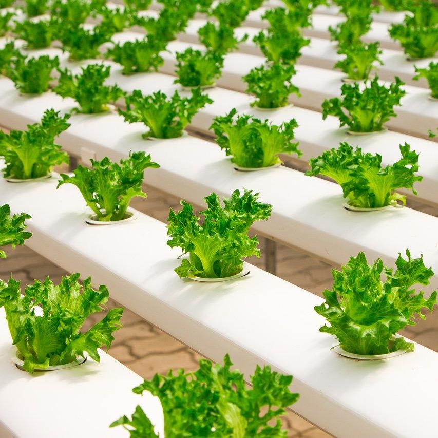 Greenhouse Vitabeam