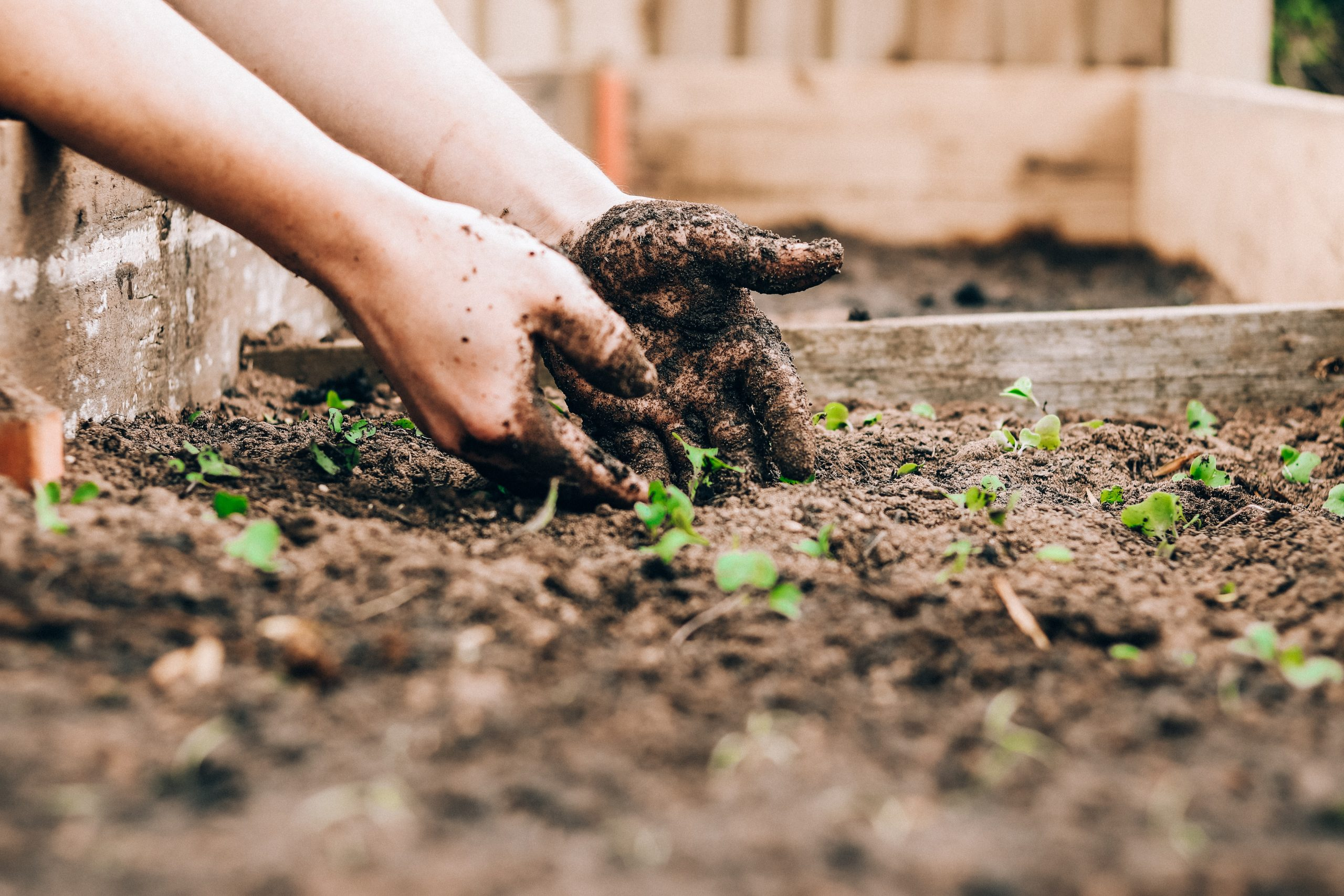 Growing food in schools helps children and the planet